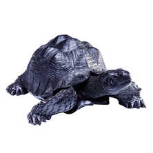 Black tortoise small
